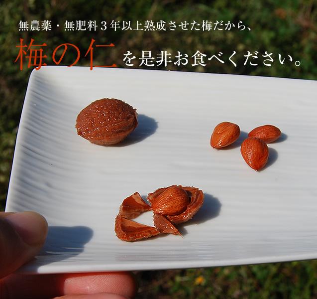 梅の仁(核)・梅の種割り器